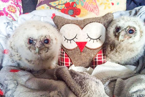 PAY-Baby-Owls-with-Teddy (1)