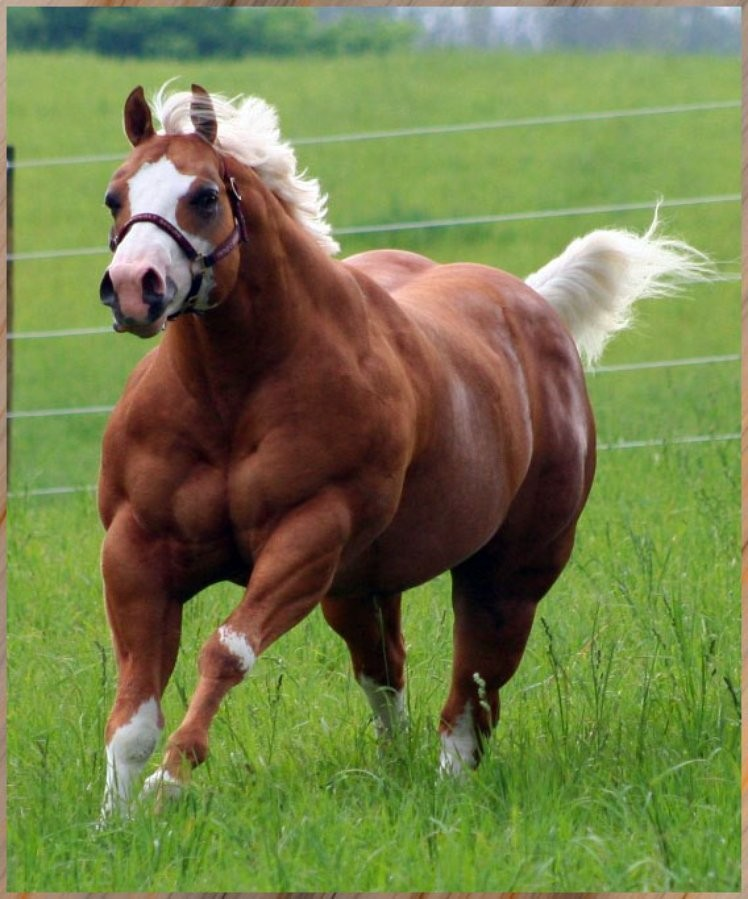 Most muscular animal in the world