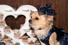 PAY-Cascade_elvis_bella_dogwed004